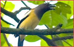 Bird, Adventure India Tour